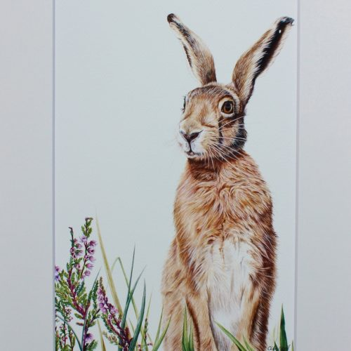 Hare Watercolour Workshop - Saturday 18th April: 10am-4pm